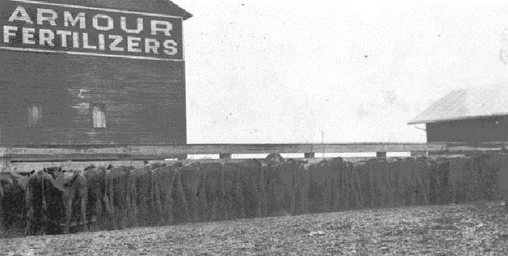 Armour-1917