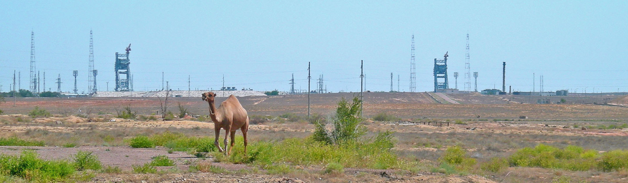 baikonur-landscape-camel-alex