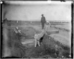 Hart-Island-1891-Jacob-Riis