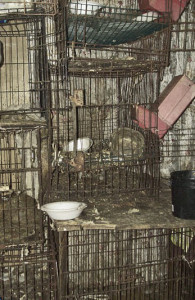 animal-cages-2