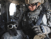 dogs of the special forces