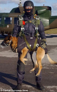 special-forces-dog-3