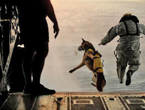 special-forces-dog-8