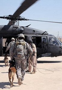 special-forces-dog-9