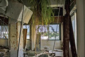 Glass-Bank-interior-foliage-2014